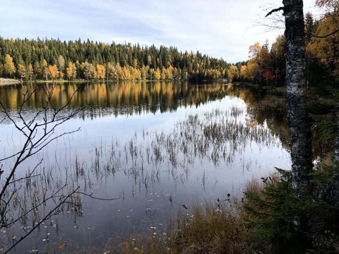 Høst i Vestmarka