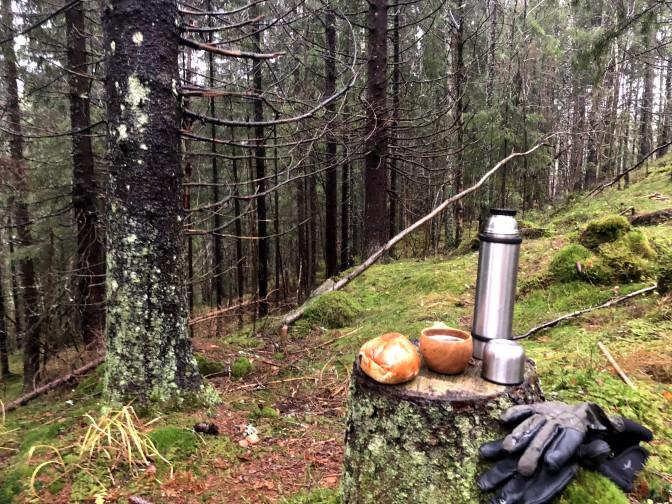 Stille i skogen i dag
