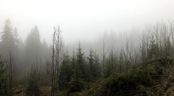 Tåke, men fint i Nordmarka