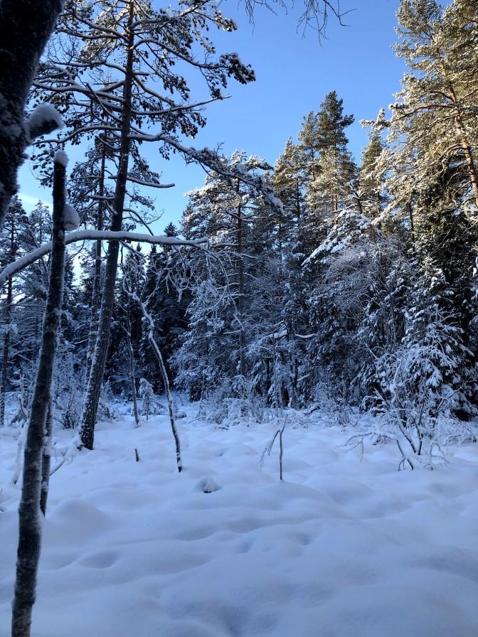 Snart en pause fra Oslomarka