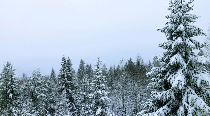 Fin tur i snø og vind